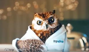 Hibou, incarnation de TripAdvisor